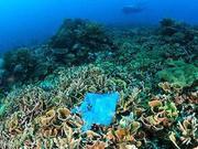 双语阅读:海洋塑料垃圾威胁珊瑚礁的生存
