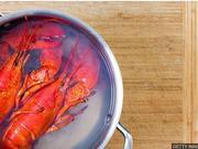 双语阅读:动物保护人士呼吁停止活煮龙虾