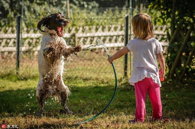 小动物好朋友一起成长的美好瞬间,这暖化人心的跨界友情实在是太温馨