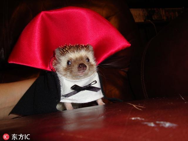 小动物cosplay