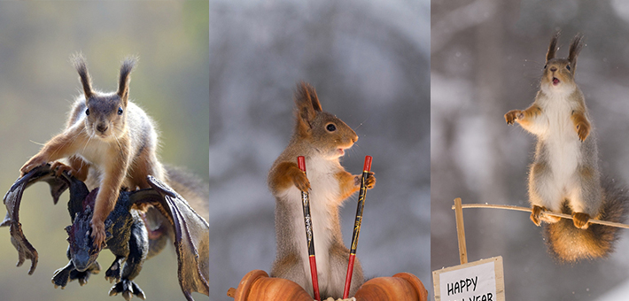 可爱小松鼠喜迎中国年