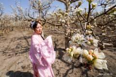 People enjoy blooming pear blossoms in Korla, China's Xinjiang