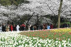 People visit Taiziwan Park in China's Hangzhou