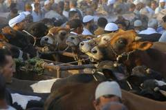 Egyptian Muslims to celebrate Eid al-Adha on Aug. 21