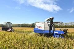 Rice harvest season begins in NE China's Heilongjiang