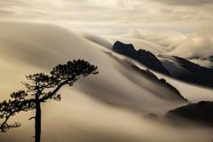Sea of clouds over Huangshan Mountain after the rain