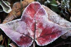 Frosted plants seen in east China's Yangzhou