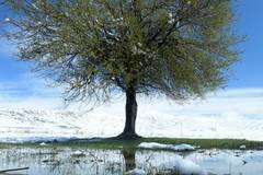 Snow hits vast grassland in Sichuan