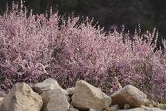 In pics: flowers in Zhangjiakou, north China's Hebei