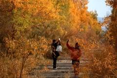 Scenery of populus euphratica forest in Gansu