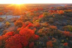 Autumn scenery of Daqinggou national reserve in Inner Mongolia