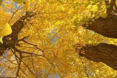 Autumn scenery in Wuwei, NW China