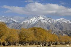 Enjoy autumn scenery in Taxkorgan Tajik Autonomous County, Xinjiang