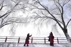 Scenery of rime-covered trees along Mudanjiang River in Heilongjiang