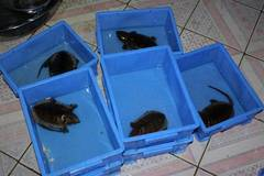 Suspect detained for trafficking turtles in Yunnan