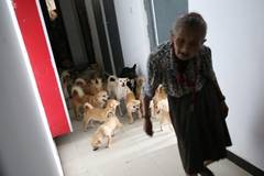 78-year-old grandma who keeps dozens of stray dog refuses to move