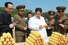 Top leader of DPRK gives field guidance to Farm No. 1116 under KPA Unit 810
