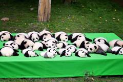 23 panda cubs meet public in Chengdu