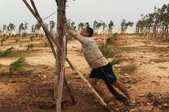 Man who saves trees on Sansha Islands goes viral