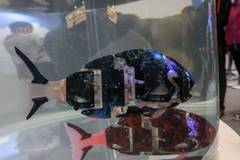 Pricy bionic fish displayed at Robot Exhibition in Beijing