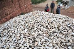 Snail shells from 4,000 years ago in Yunnan