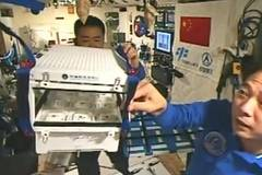 Astronauts grow lettuce in space lab