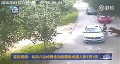 Beijing safari tiger attack survivor sues park for over 1.54 million yuan