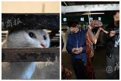 Ringleader of Chengdu slaughterhouse says 'not illegal' to kill cats