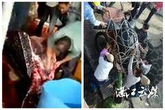 208 kg sea turtle slaughtered, meat sold for 140 yuan per kg