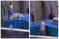 Hangzhou zoo denies abuse despite outcry after video of tiger beating goes viral