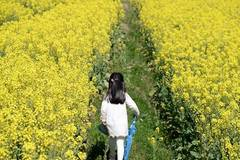 Tourists take photos in blooming rape flowers, SW China