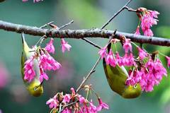 Birds play with flowers in Fuzhou, southeast China