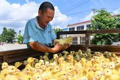 Poverty alleviation project in south China's Hainan