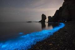 Sea turns fluorescent in Dalian