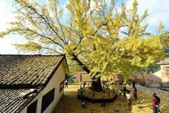 Stunning snapshots from autumn scenery across China