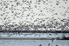 Thousands of migrant birds gather at wetland for rest in Tianjin