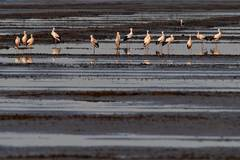 See vital migratory bird wetland habitat in north China's Hebei
