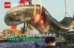 18-meter sperm whale found dead off China's northeast coast