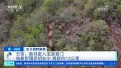 China's migrating elephant herd heads southwest