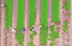 Spring farming across China