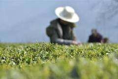 Farmers busy with farm work with temperature rising across China