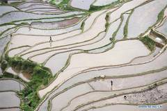 Farmers across China work on day of Guyu
