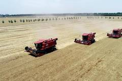 Wheat enters harvest season in China's Hebei