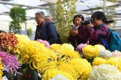 11th cultural festival of chrysanthemum held in Beijing
