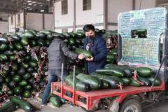 Changsha steps up efforts to ensure vegetable supply