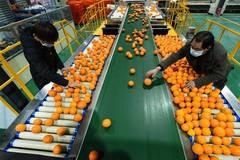 Work, production resume orderly in China amid novel coronavirus control