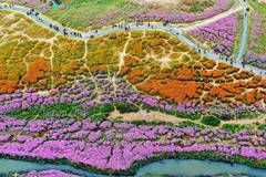 Aerial view of spectacular flower fields in Jiangxi