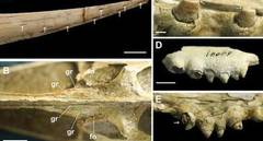 Chinese scientists report new findings on unique pterosaur fossil
