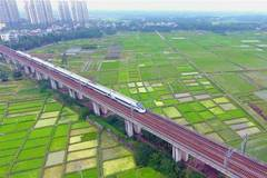 Bullet trains seen above field of cole flowers across China