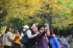 Ginkgo trees scenery attracts tourists in Yunnan